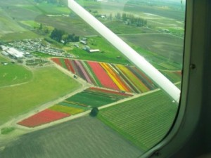 Skagit Scenic Air Tour Tulips